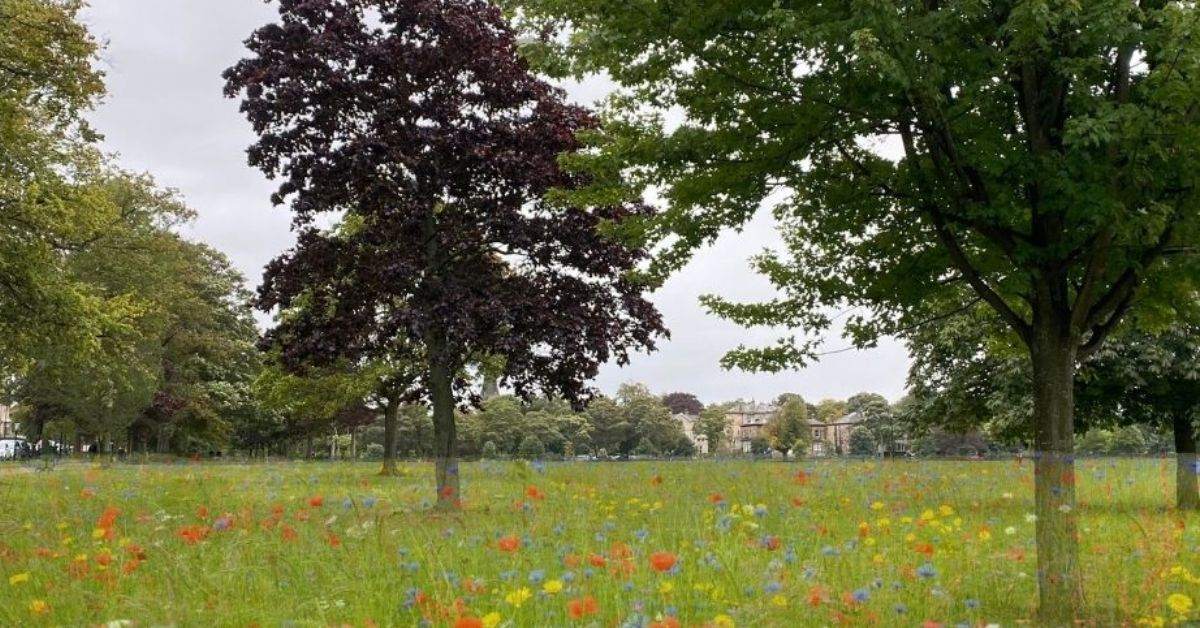 Wildflower planting starts on the Stray tomorrow