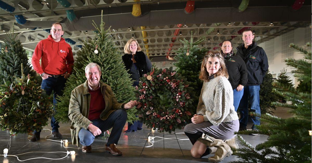 Downing Street Christmas tree chosen in Harrogate today
