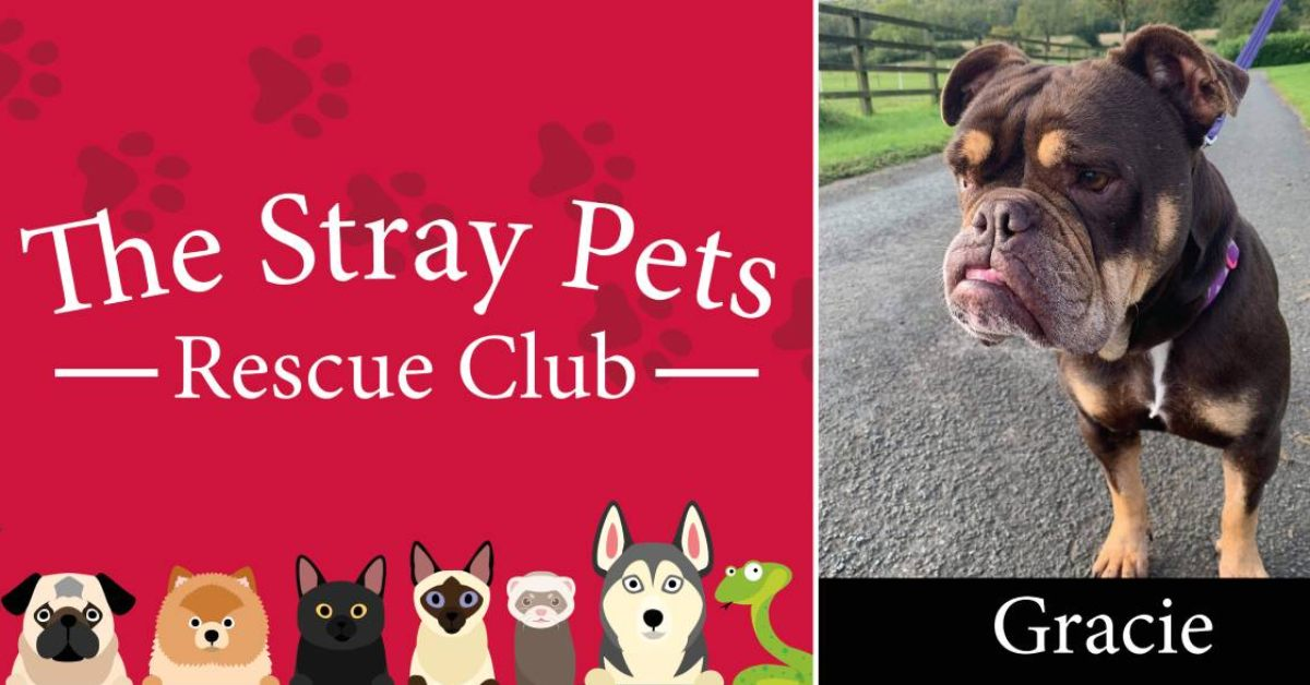 The Stray Pets Rescue Club: Could you give one of these animals a happy home?