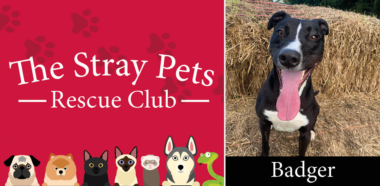 Stray Pets Rescue Club: Ginger, Bongo, Badger and a rat all need loving homes