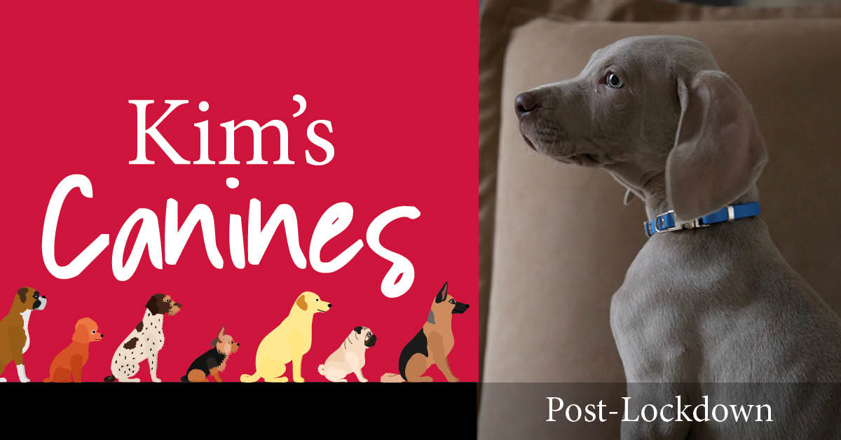 Kim's Canines: supporting our dogs out of lockdown