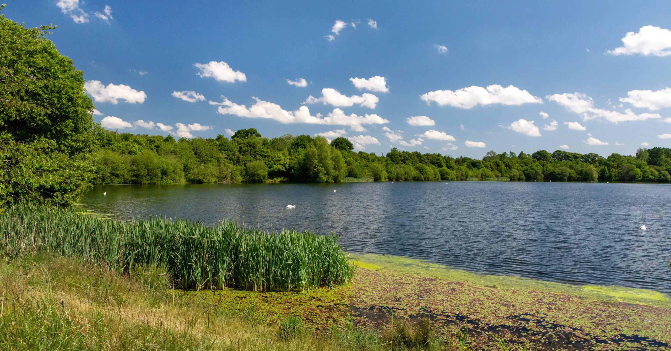 170 Knaresborough homes 'catastrophic' for Hay-a-Park wildlife