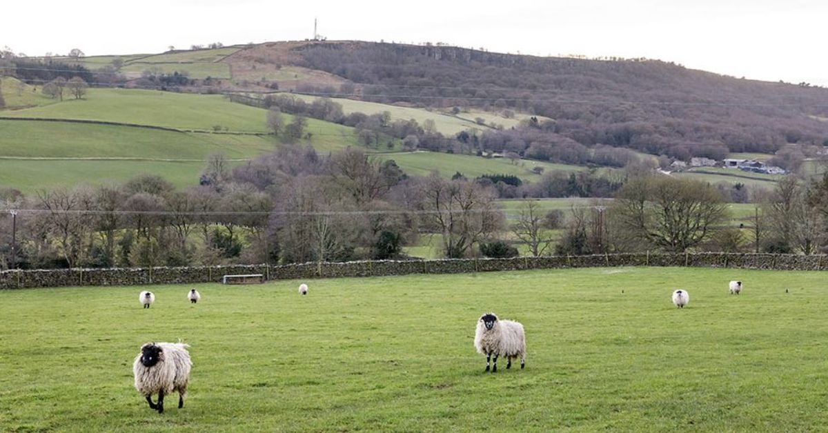 Harrogate district farmers fearful of post-Brexit future