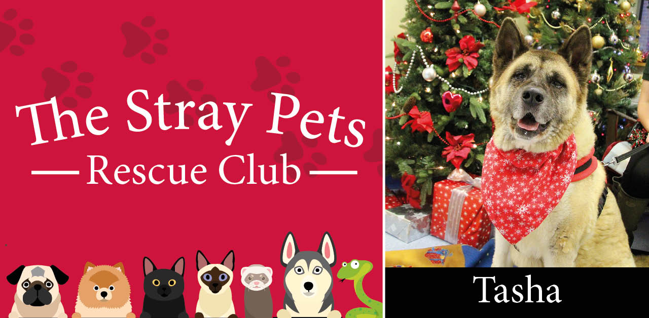 Stray Pets Rescue Club: the pooches needing a home this Christmas