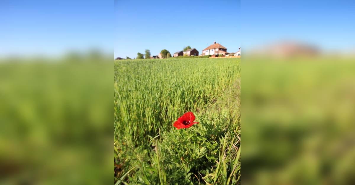 Final approval for 80-home Green Hammerton scheme
