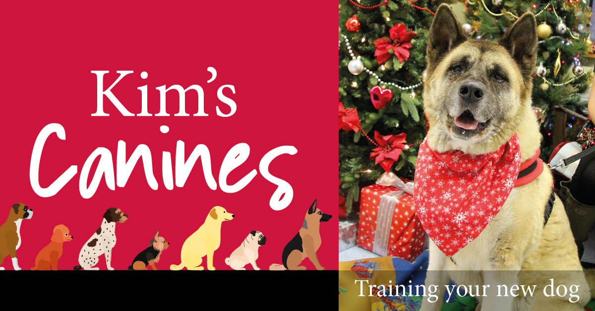 Kim's Canines: a dog is for life, not just for Christmas