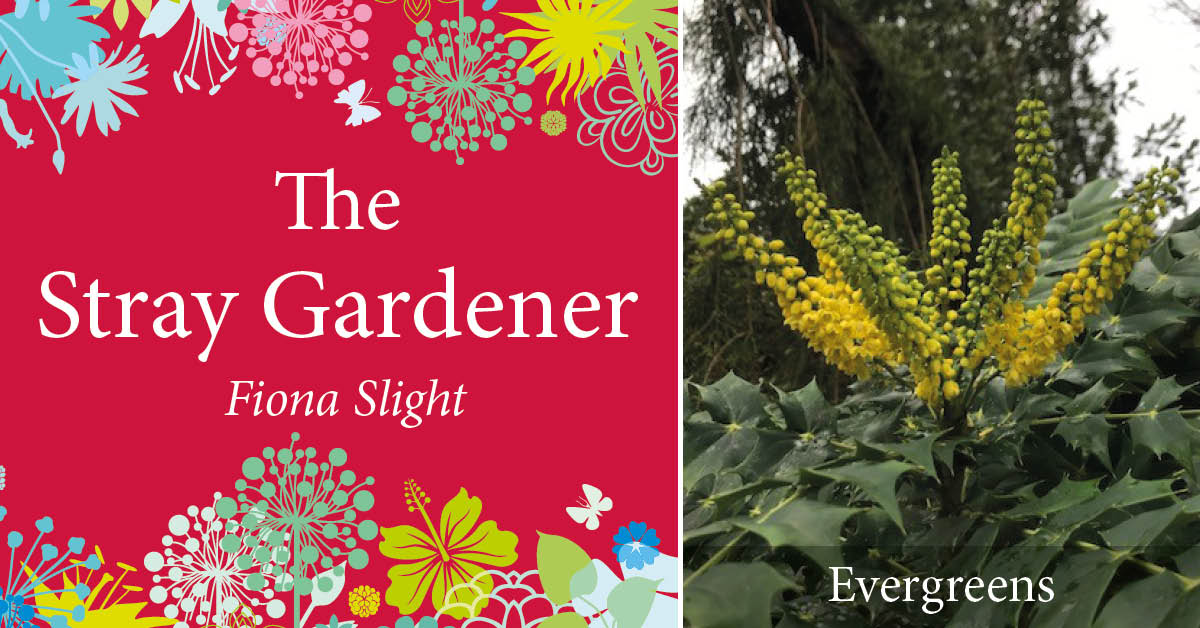 The Stray Gardener: Time for evergreens to shine
