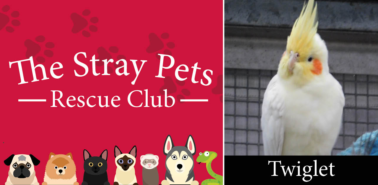 Stray Pets Rescue Club: could Troy, Twiglet, or a trio of degus be your new pet?