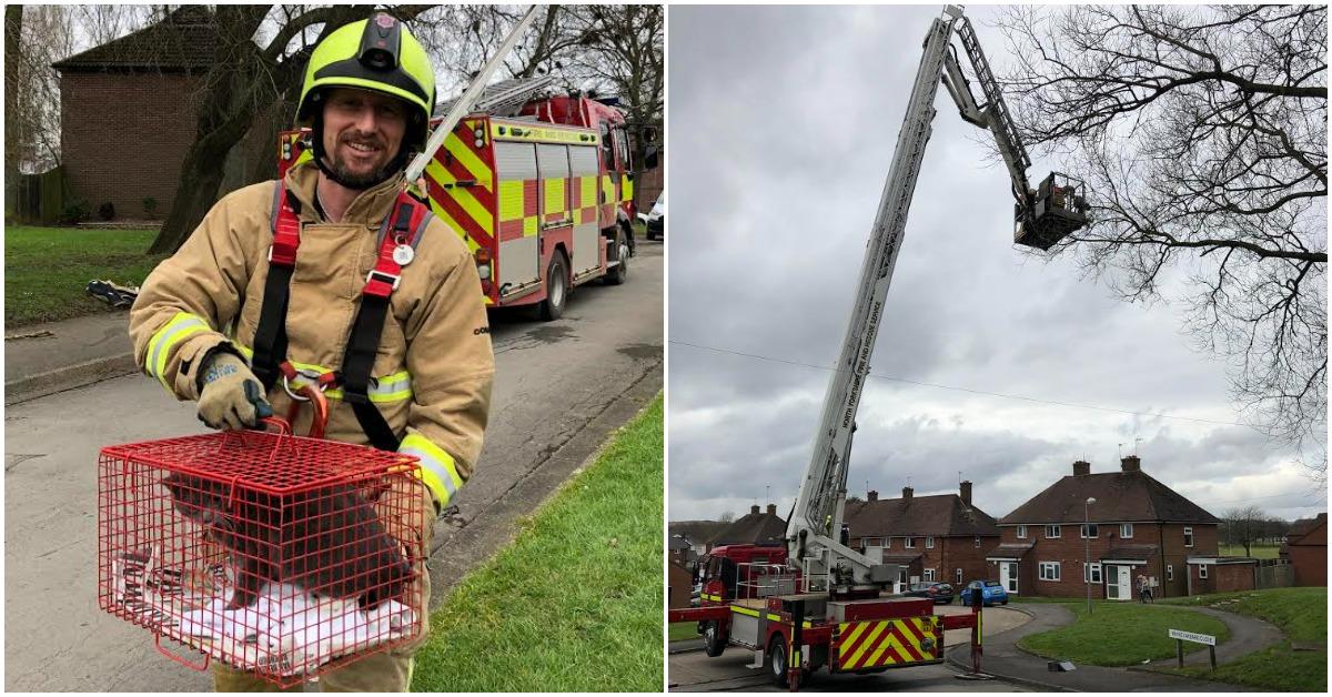 Fire service helps Cat stuck in tree in Ripon
