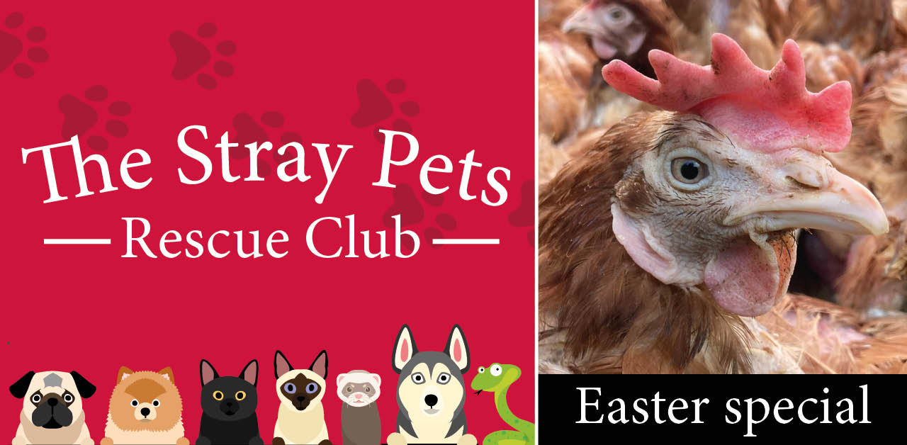 Stray Pets Rescue Club: Easter special