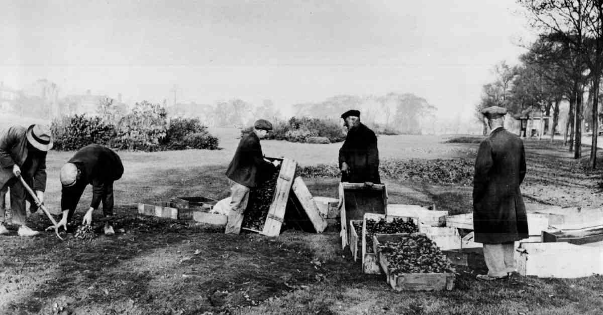 History: Harrogate's Battle of the Flowerbeds