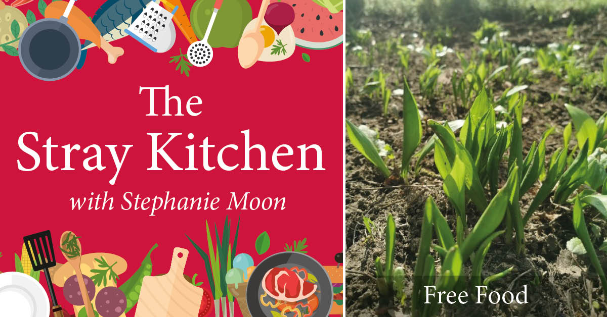 Stray Kitchen with Stephanie Moon: Free Food