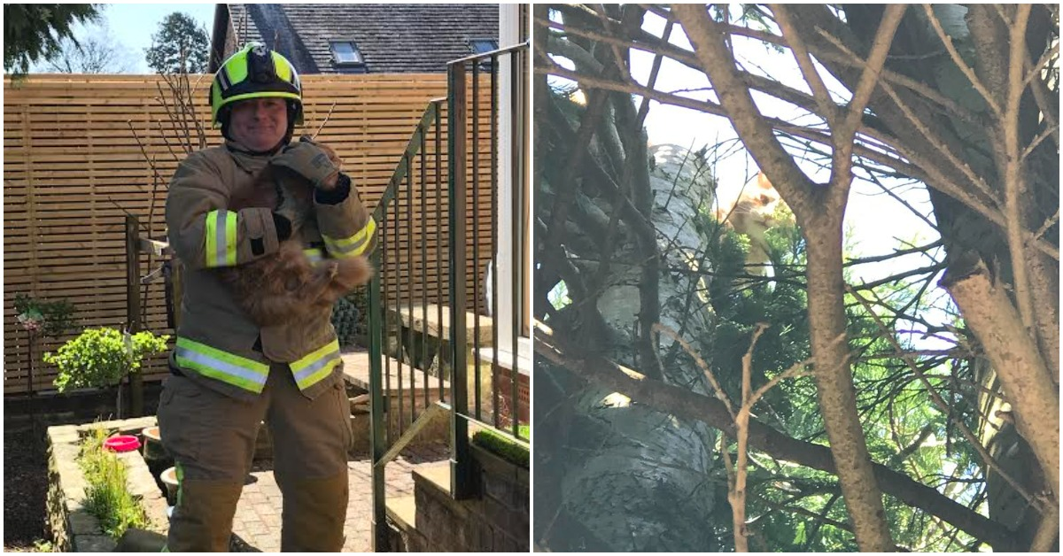 Ripon firefighters rescue cat chased up tree by dog