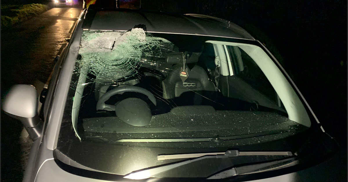 'Real scare' for Ripon driver as timber smashes into car