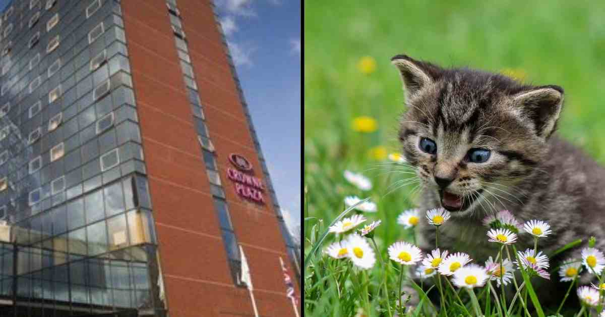Final volunteer call for cat charity Harrogate hotel abseil