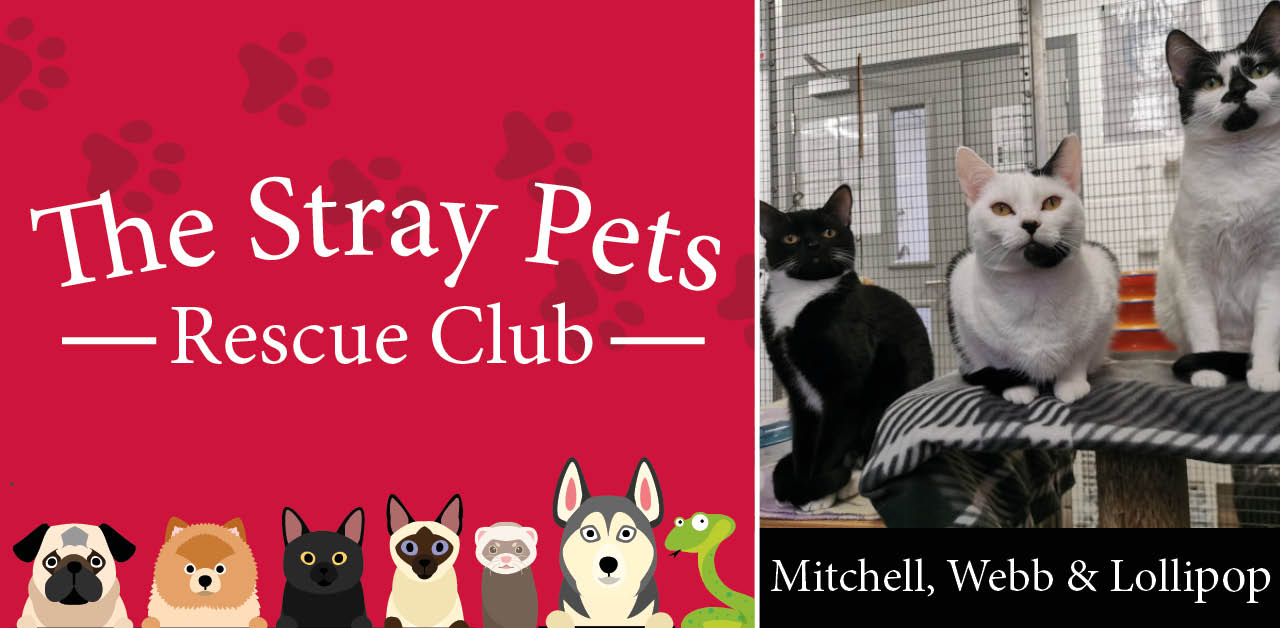 Stray Pets Rescue Club: the dog, cats and rabbits hoping you'll be their new family