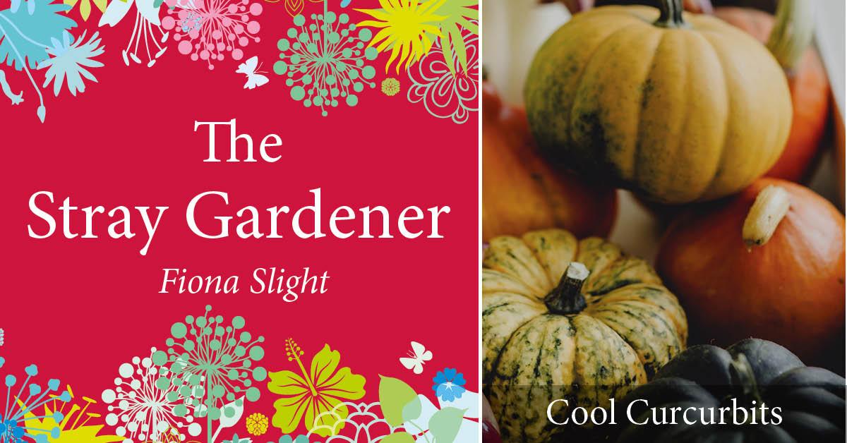 Stray Gardener: Cool Cucurbits