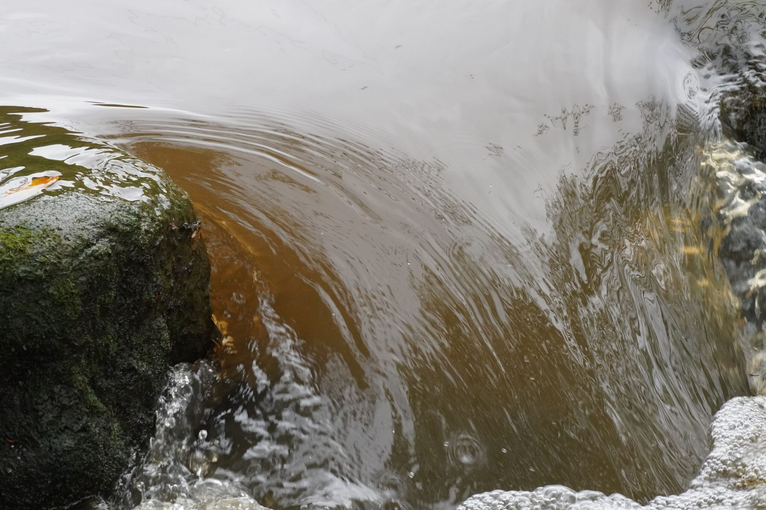 River Nidd pollution