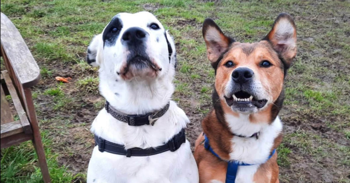 Founder resigns from Harrogate dog rescue charity