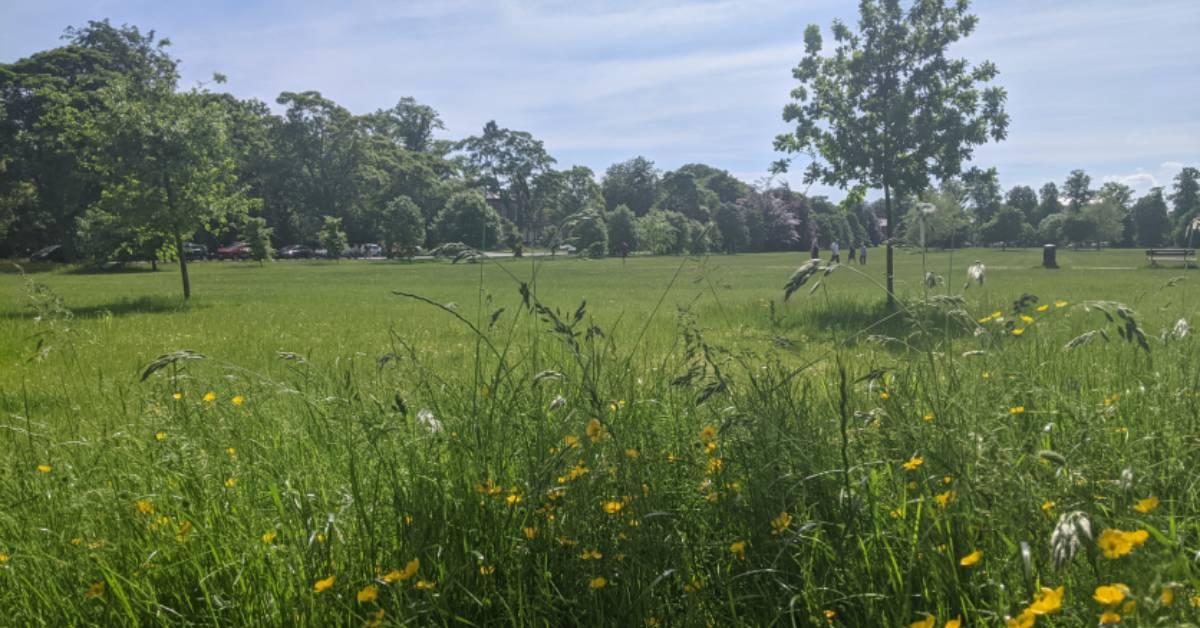 Harrogate's 'rewilding': untidy or biodiversity boon?