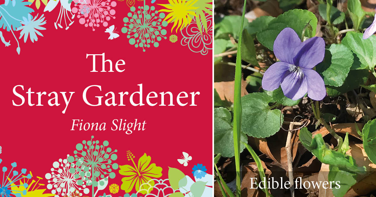Stray Gardener: Flavourful edible flowers