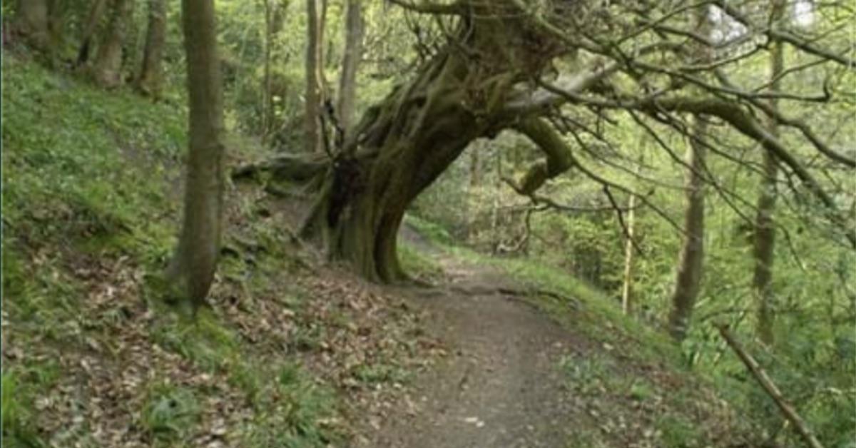 Credit: Woodland Trust staff
