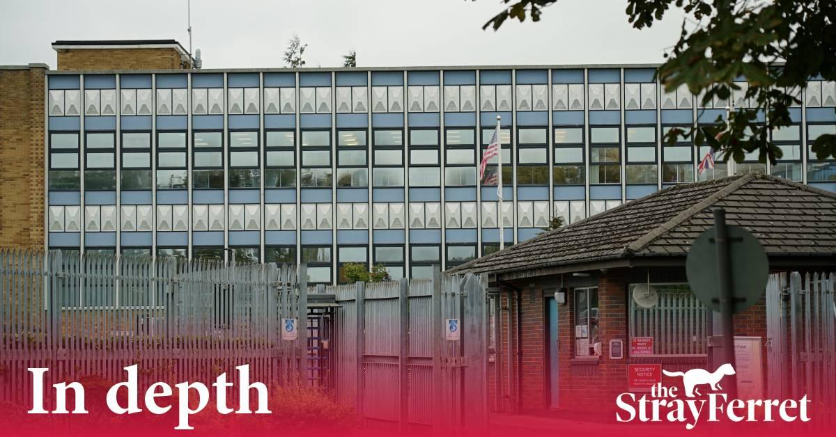 Explainer: Animal testing in Harrogate
