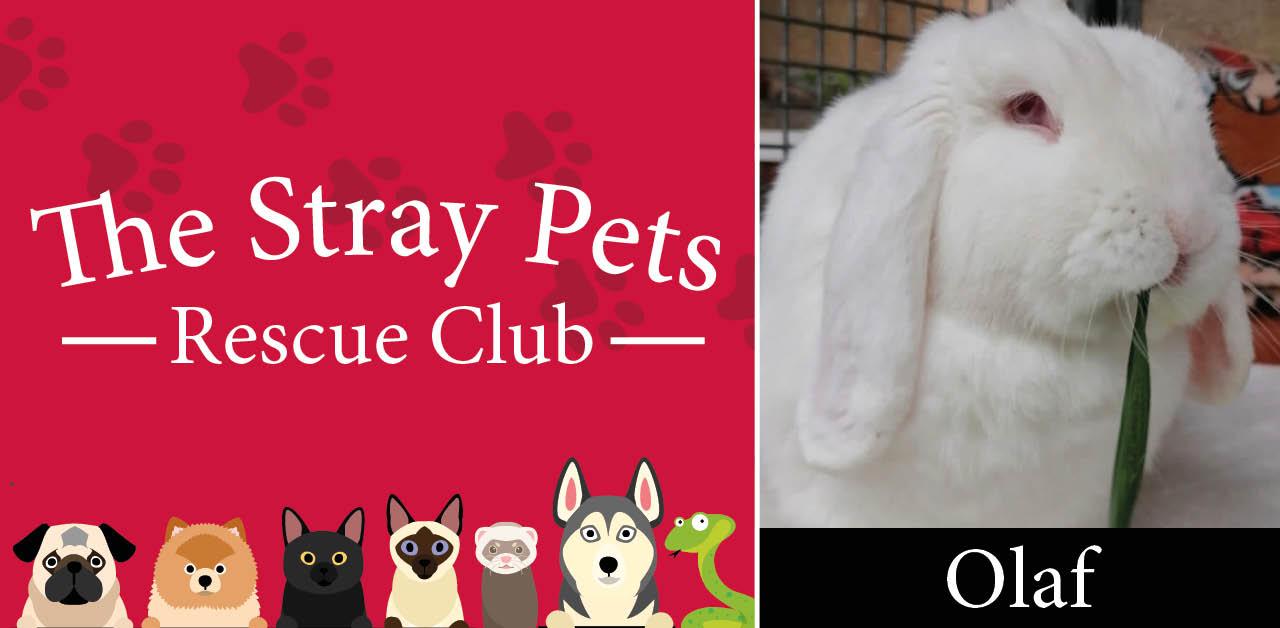Stray Pets Rescue Club: Olaf, Monty, Gracie & Georgia need a loving home