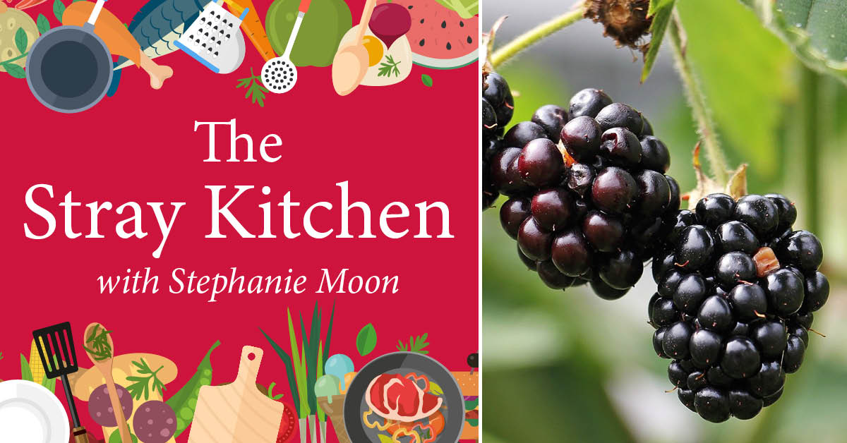 Stray Kitchen: a booming year for Harrogate blackberries