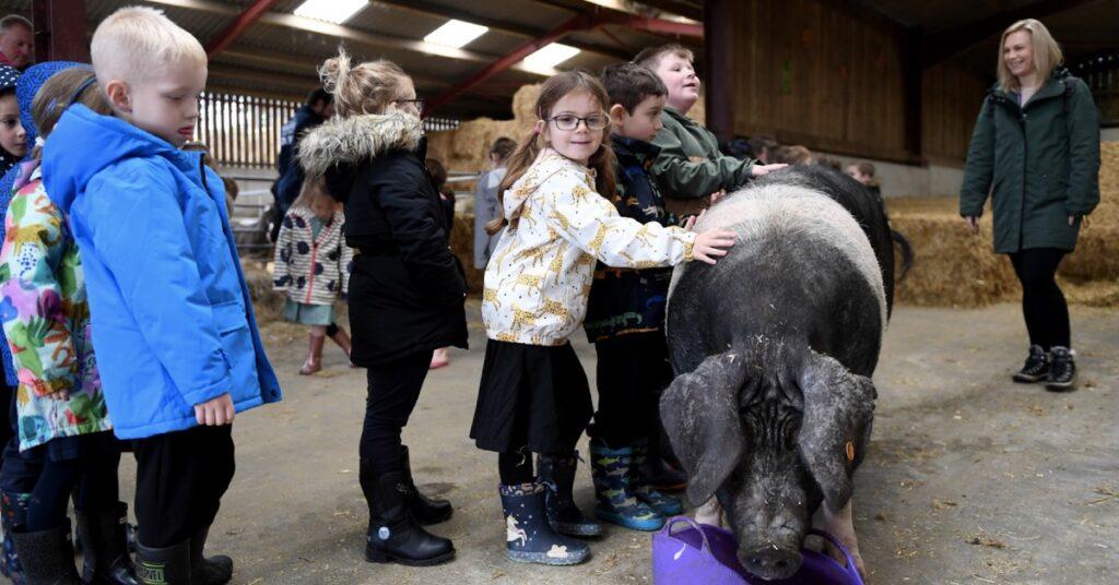 school kids visit summerbridge farm