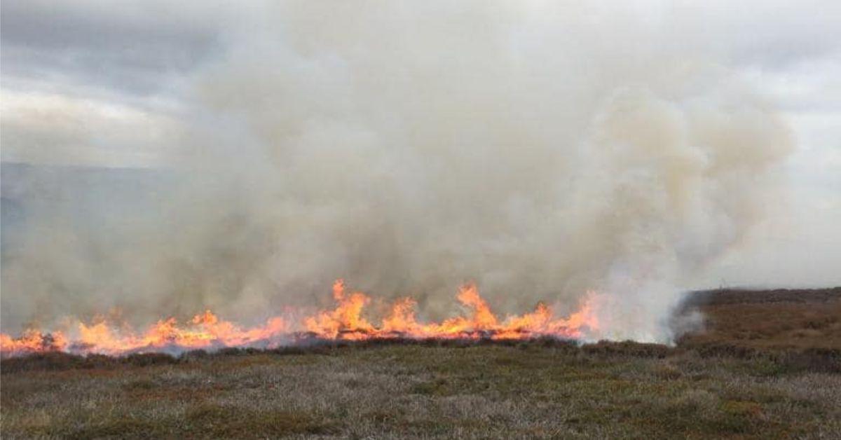 Heather burning season begins on Harrogate district moors